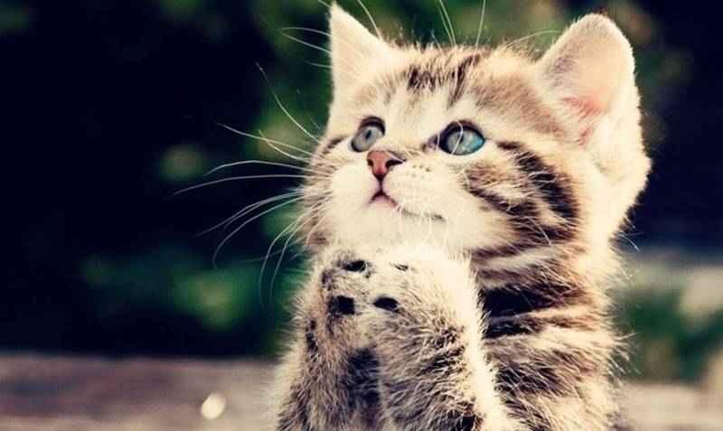 Rahasia Kucing