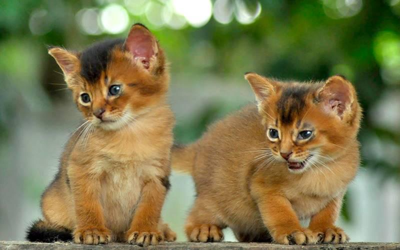 93 Gambar Gambar Kucing Usia 1 Bulan Terlihat Cantik