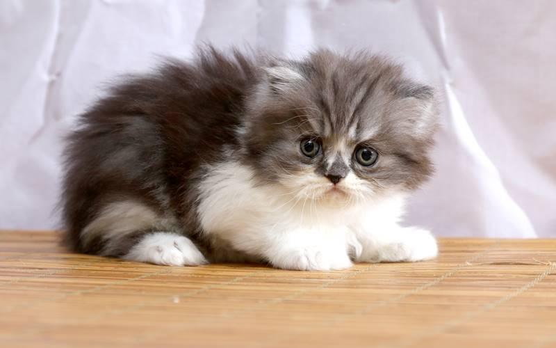 Bayi Kucing Terkena Penyakit