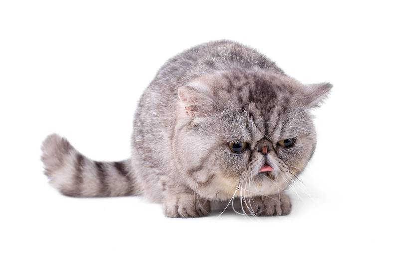 Stres Pada Kucing