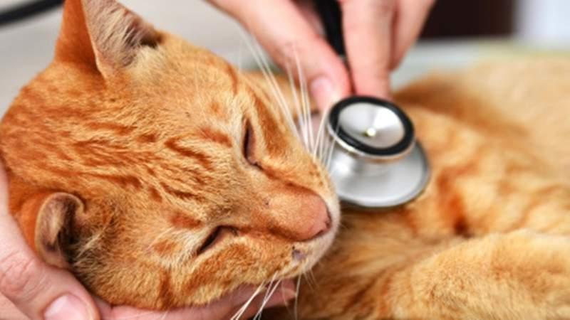 Jika Kucing Mengalami Diare Lakukan Hal Ini Catlovers Id