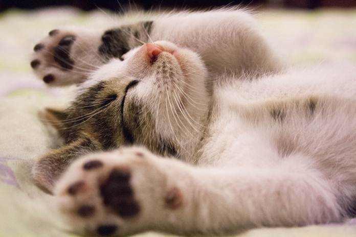 tanda-tanda kematian kucing