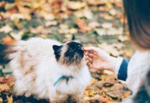 ccara berkomunikasi yang baik dengan kucing