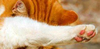 Cara memotong kuku kucing