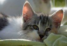 memandikan kitten