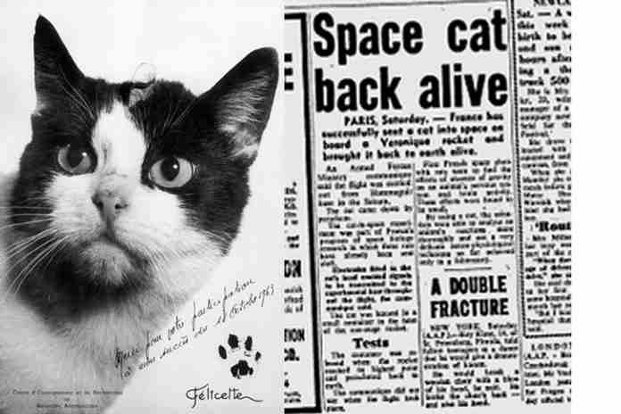 kucing pertama yang pernah ke luar angkasa