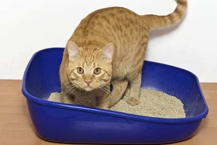 kucing tidak buang air sembarangan