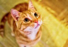 kucing bisa baca ekspresi