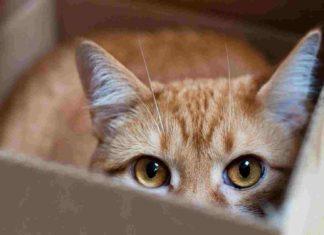 tempat perlindungan ideal buat si kucing