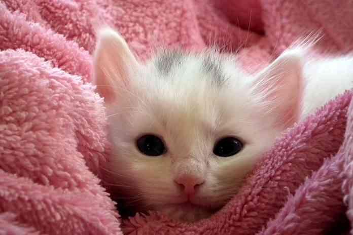 Grooming pada kitten