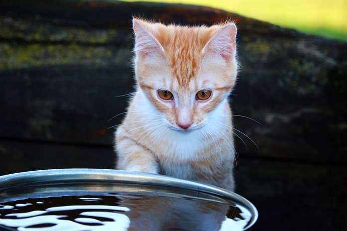 kucing benci air