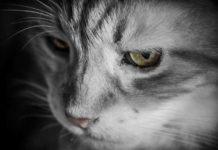 kucing dianggap paling istimewa
