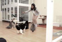 kucing lebih memilih kamu