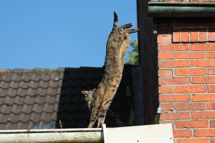 kucing selalu mendarat sempurna