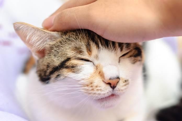 mengapa kucing suka dielus kepalanya