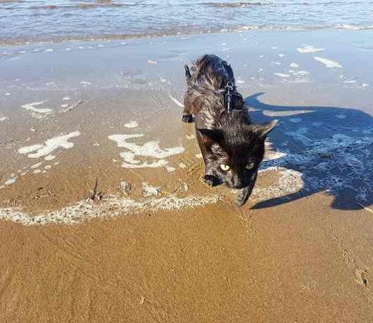 Kucing pecinta pantai