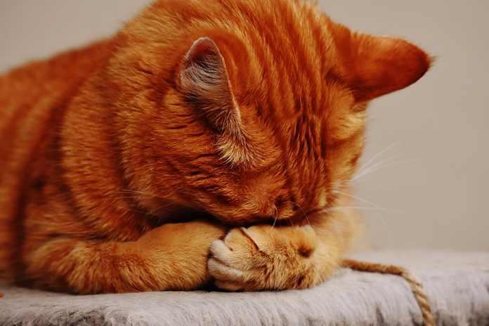 suara keras sebabkan kucing stres