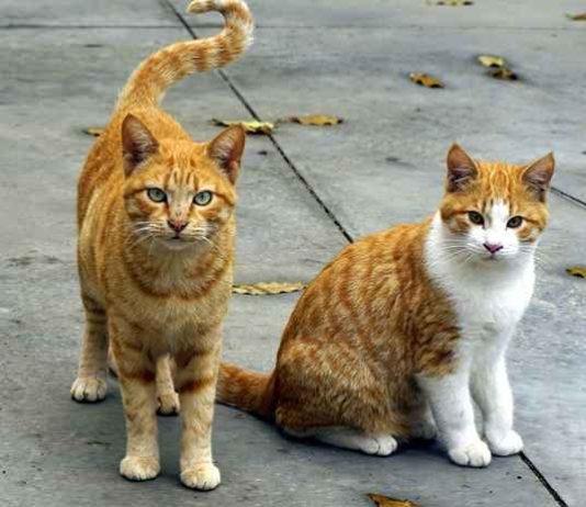 sejarah penyebaran kucing di dunia