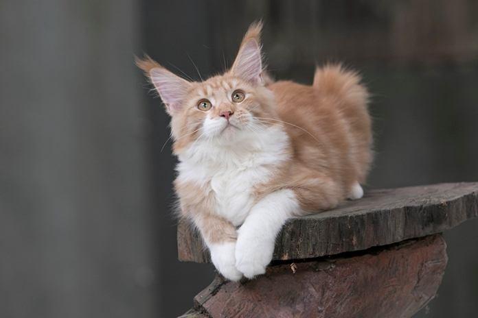 kebiasaan aneh kucing