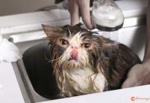 kucing perlu grooming