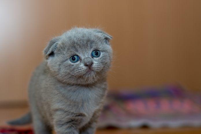 apakah kucing bisa senyum?