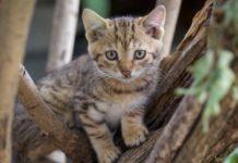 mitos kucing memiliki sembilan nyawa