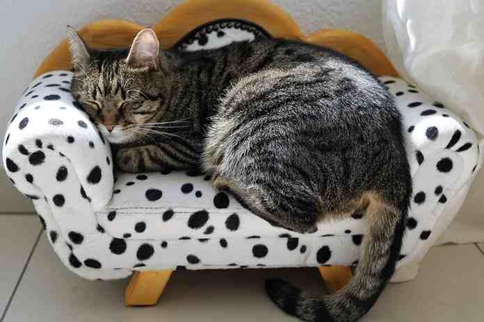 bagaimana cara mengobati kucing demam