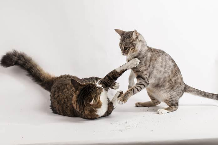 cara mendisiplinkan kucing nakal