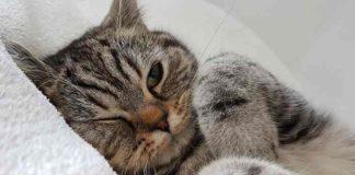 tanda kucing kurang bahagia