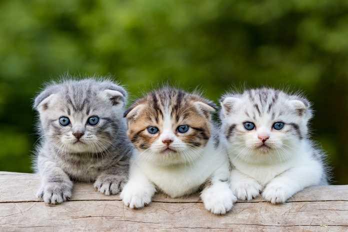 metode untuk menamai anak kucing