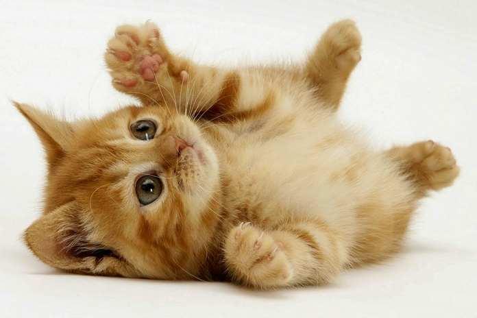 kucing takut timun, mitos atau fakta