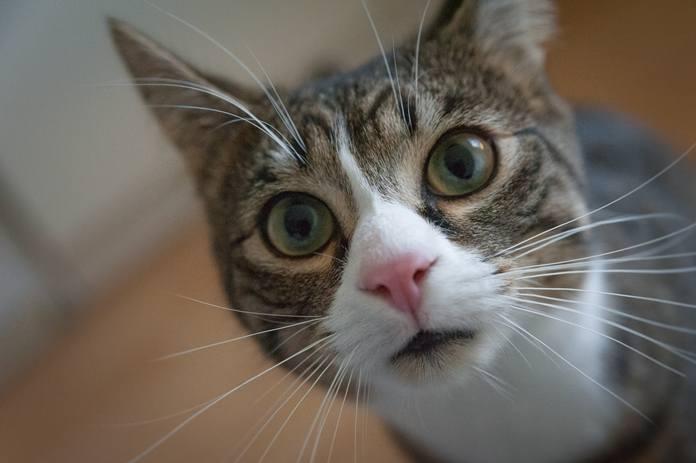 memahami cara kucing berkomunikasi