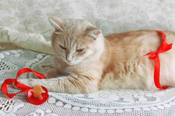 tanda-tanda khusus saat kucing mau melahirkan