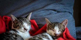 cara merawat kucing yang baru dibeli