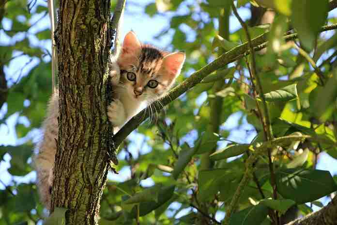 5 tanda kucing catlovers sehat
