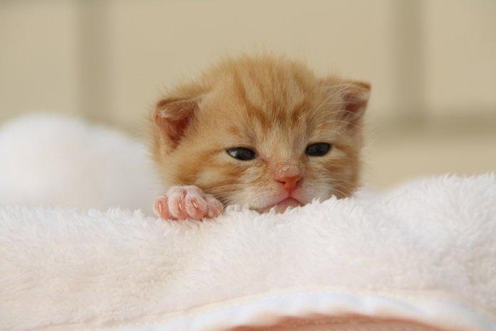 alasan induk kucing tidak mau menyusui