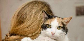 keuntungan jadi pecinta kucing