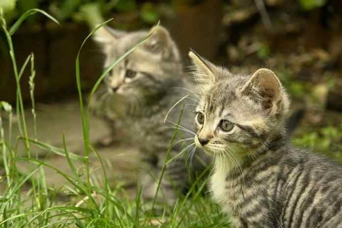 kucing bisa mengenali kerabatnya