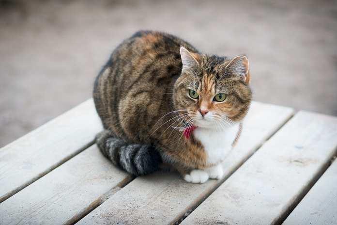kucing lebih setia pada rumah ketimbang tuannya