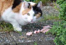 kucing tidak mau makan
