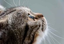 5 hal tentang kucing harus Catlovers tahu.