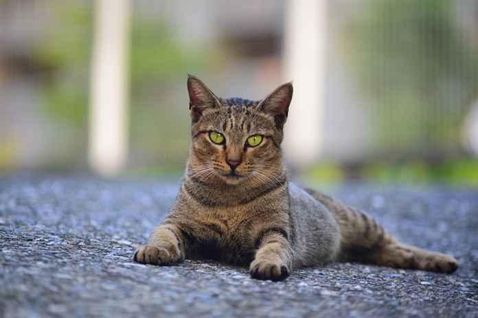 alasan kucing tidak suka manis