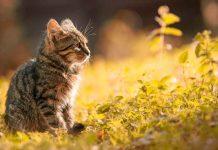 keunikan dari ingatan seekor kucing