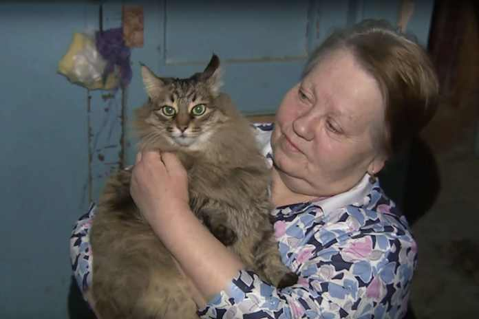Masha, kucing penyelamat nyawa bayi di Rusia