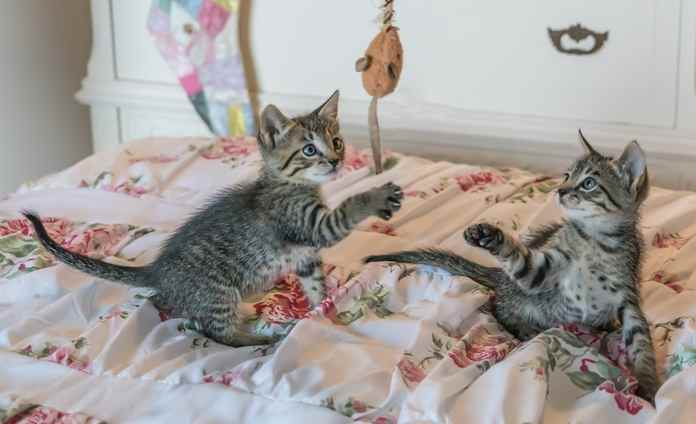 olahraga untuk kucing