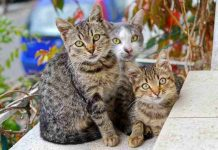 Ratusan juta kucing liar di dunia