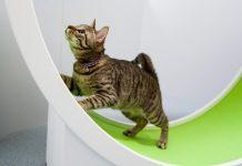 kucing suka mencari ruangan sempit