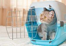 mengadopsi kucing