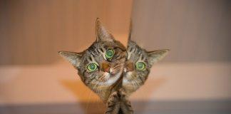 tanda kucing yang mengidap rabies