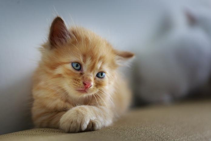 penyebab diare pada kitten
